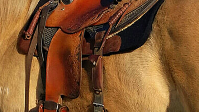 Does My Saddle Fit My Horse? Signs Of A Poor Saddle Fit