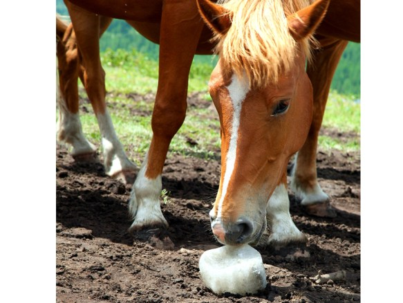 The Importance Of Salt In A Horses Diet And Is My Horse Tying Up?