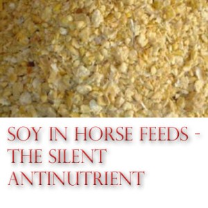 Soy In Horse Feed