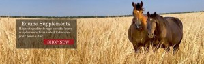 horse supplements, horse health, equine nutrition, equine supplements