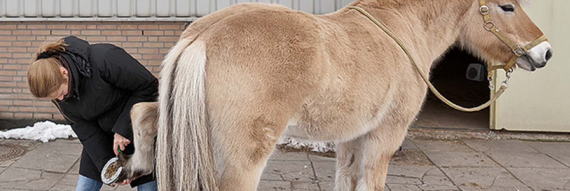 Tips for Winter Horse Grooming  Equestrian Barns