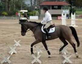 Cavalletti work is an excellent way to strengthen your horse