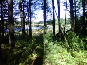 Through the trees Beaver Pond sparkled.