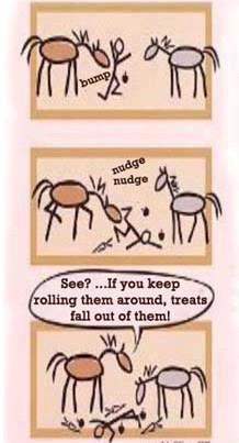 Feeding horse treats