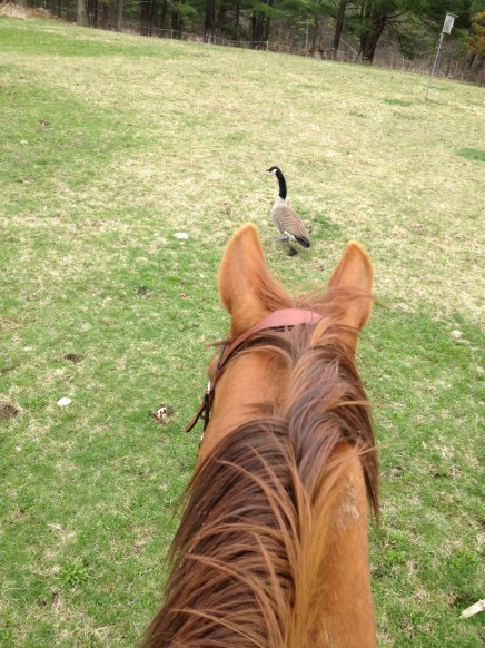 Freedom Chasing Goose