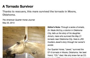 A tornado survivor