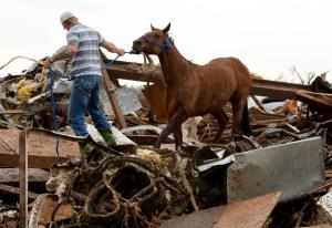 Horses rescued from debris