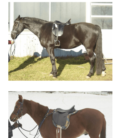 Saddle fitting long distance
