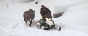 Valentine being led home via snow mobile