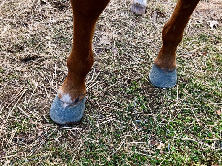 Farrier Glue on Shoes