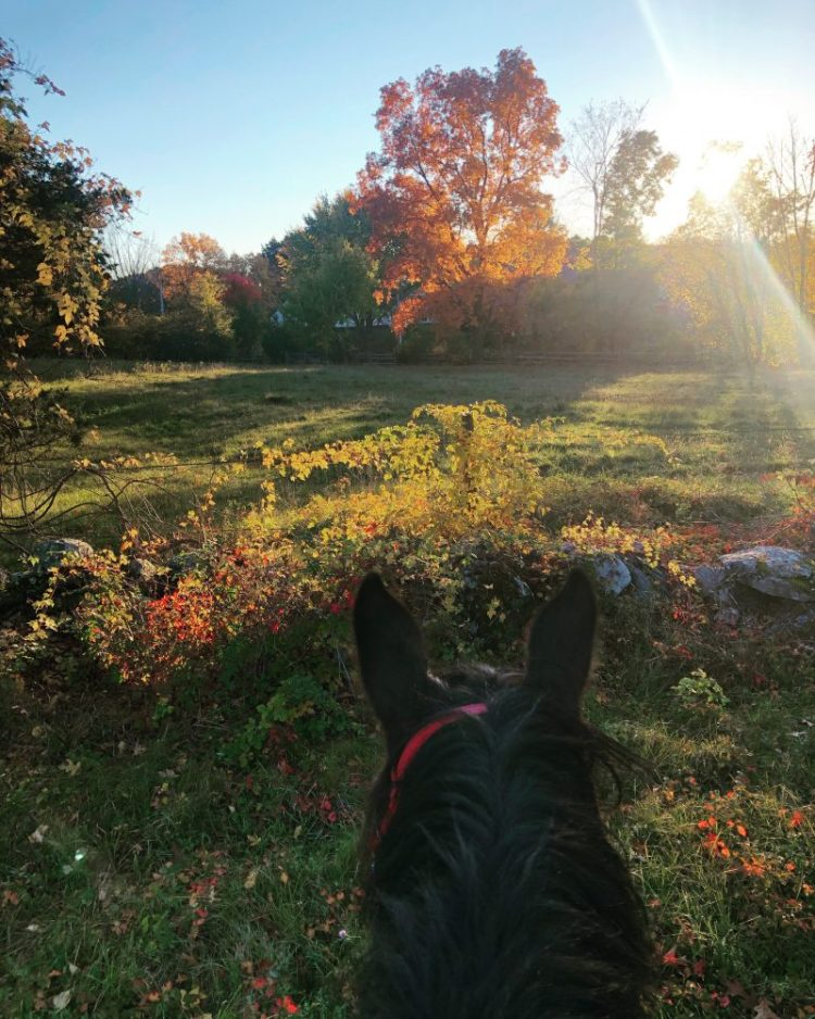 The spectacle that is fall