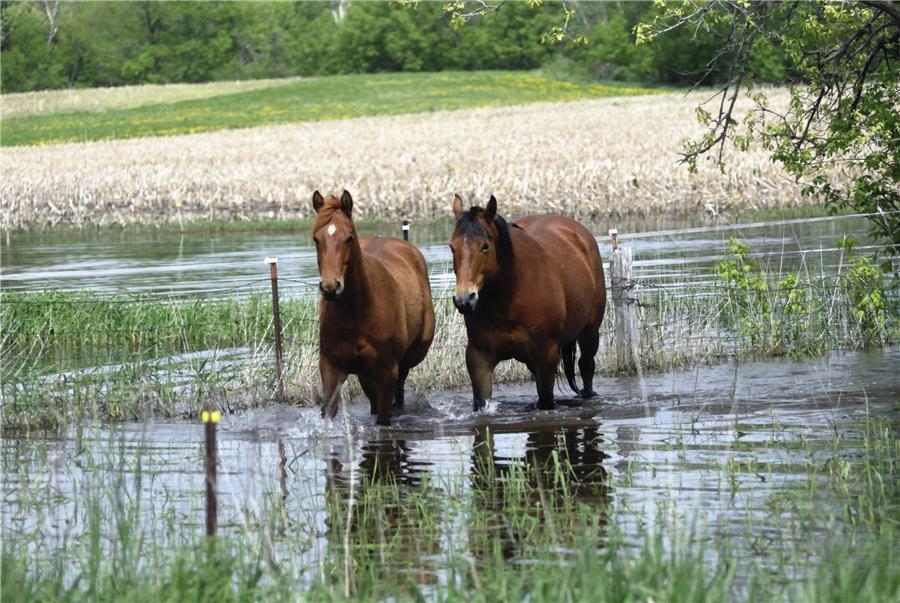 horses-flood-water