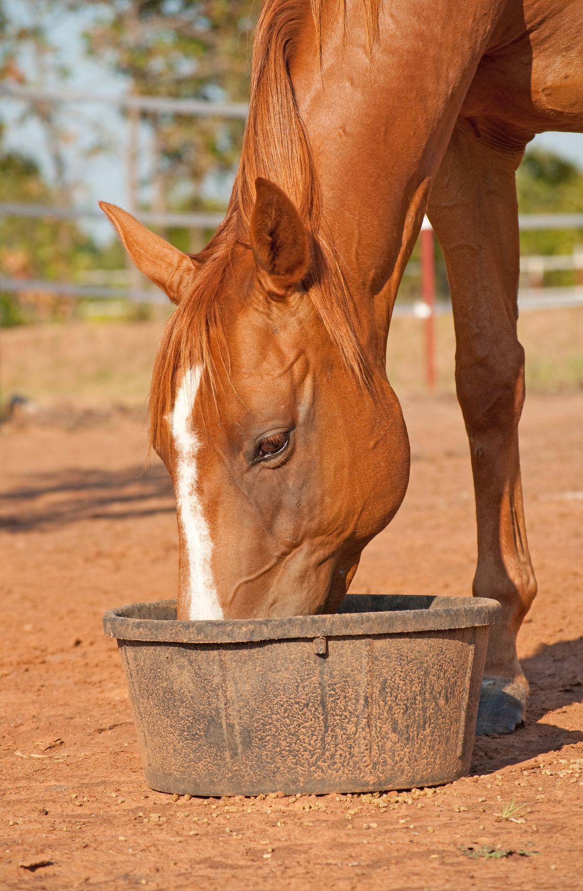 complete feeds for horses the equine nutrition nerd
