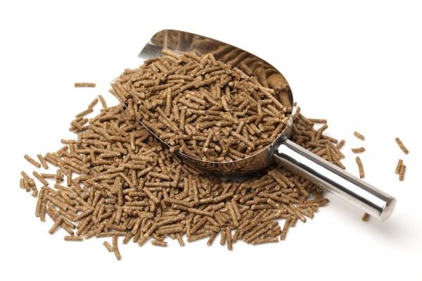 Grain Horse Feed Scoop
