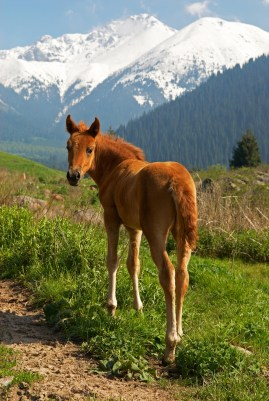 Concentrates In Horse Diet The Equine Nutrition Nerd