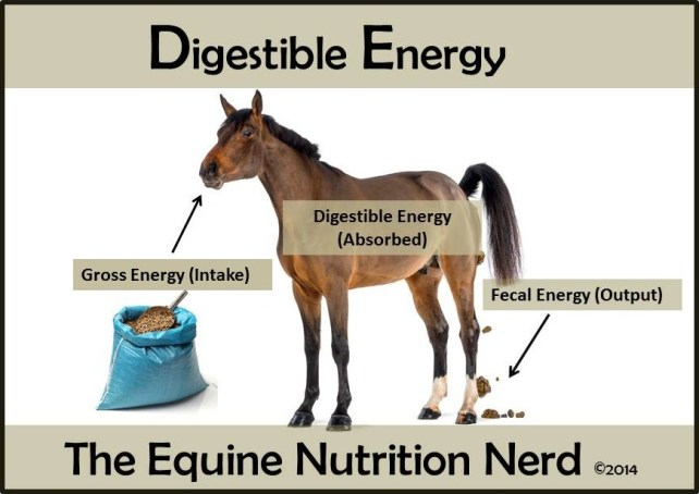 Digestible Energy In The Equine Diet The Equine