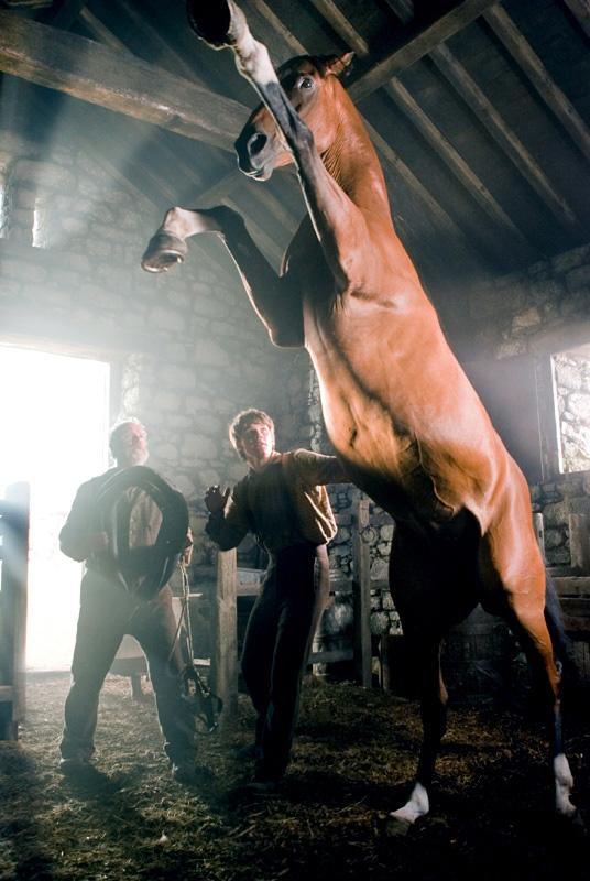 Le Cheval De Guerre Film : cheval, guerre, Cheval, Guerre, Horse, Movies