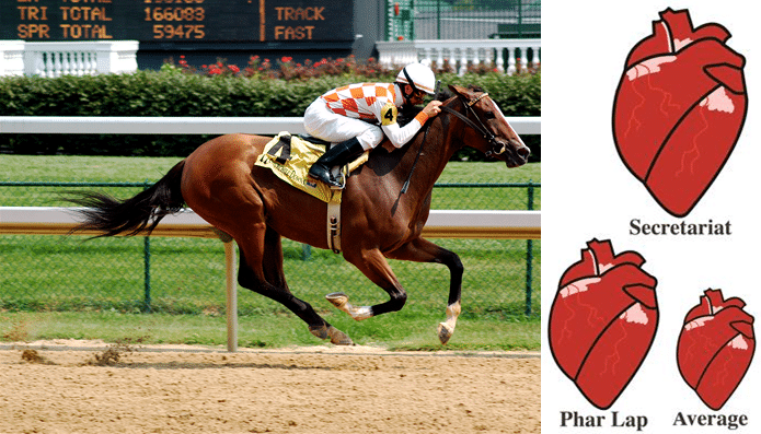 racehorse hearts