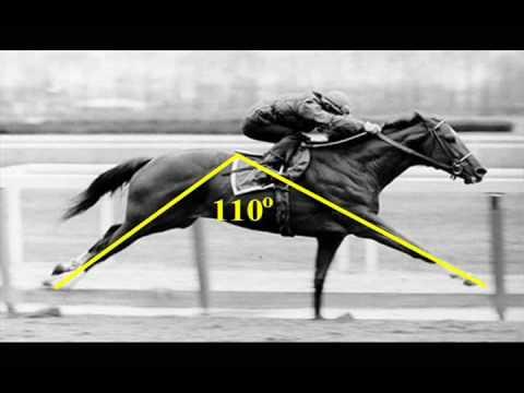 huge striding racehorse
