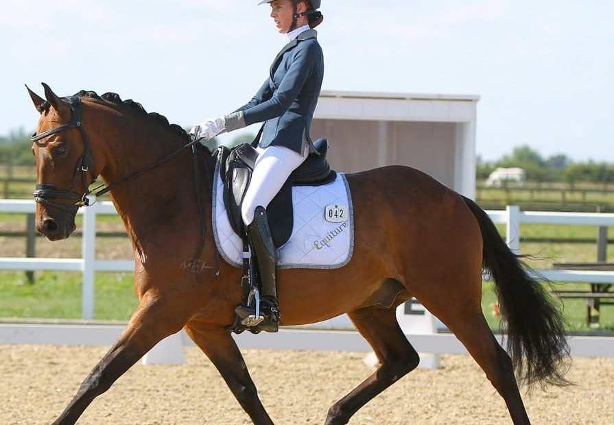 dressage ex racehorse
