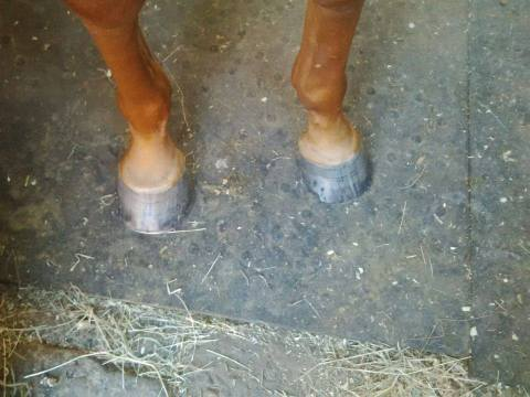 shoeless2