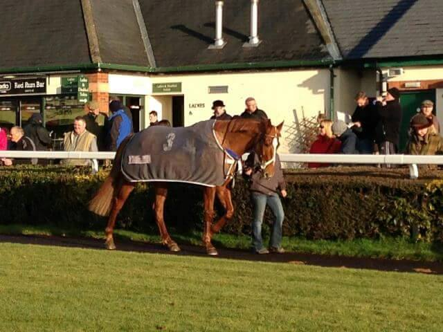 scottie as a racehorse walking around the pre parade ring