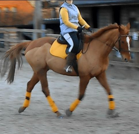 do horses respond to clicking. Online Dressage
