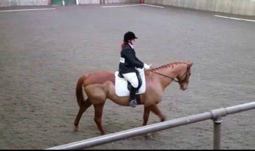 merino wool saddle pad white