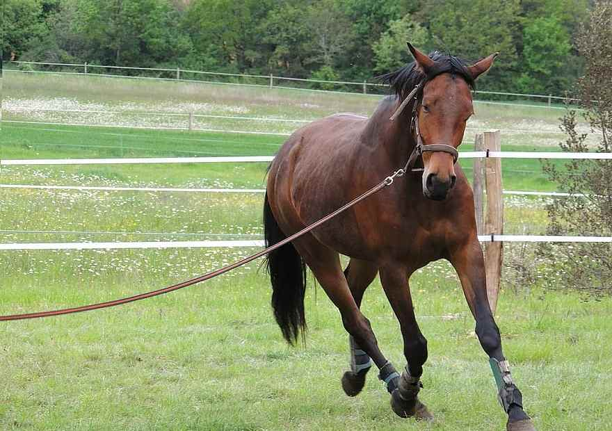 more research could stop ongoing lameness