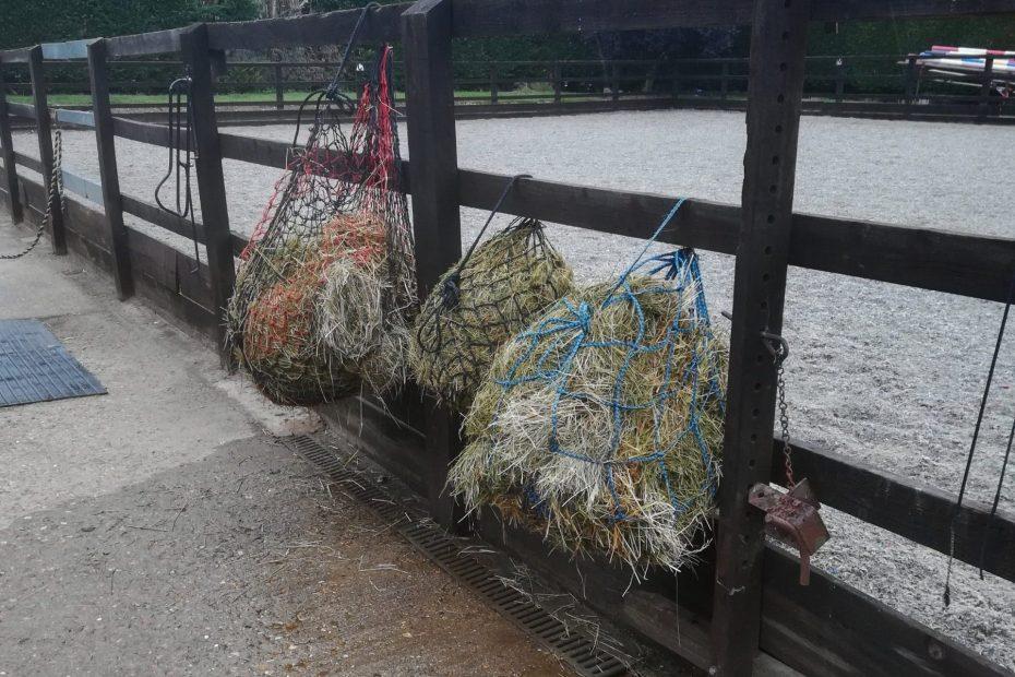 soaking vs steaming hay, allergies in horses