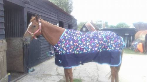 shires tempest turnout with dog print