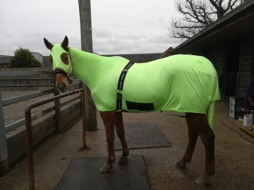 horsehoodz bodz