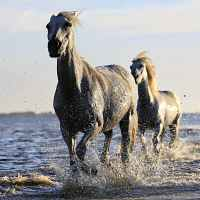 seasonal mares in the sea