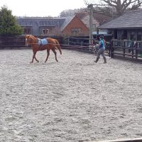 how to start long reining your horse