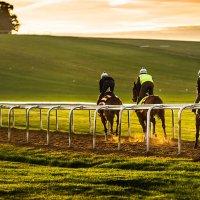 the ex racehorse market