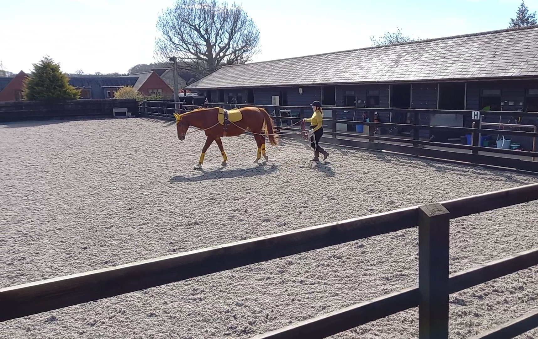 April Long Reining with Dressage Riders Online