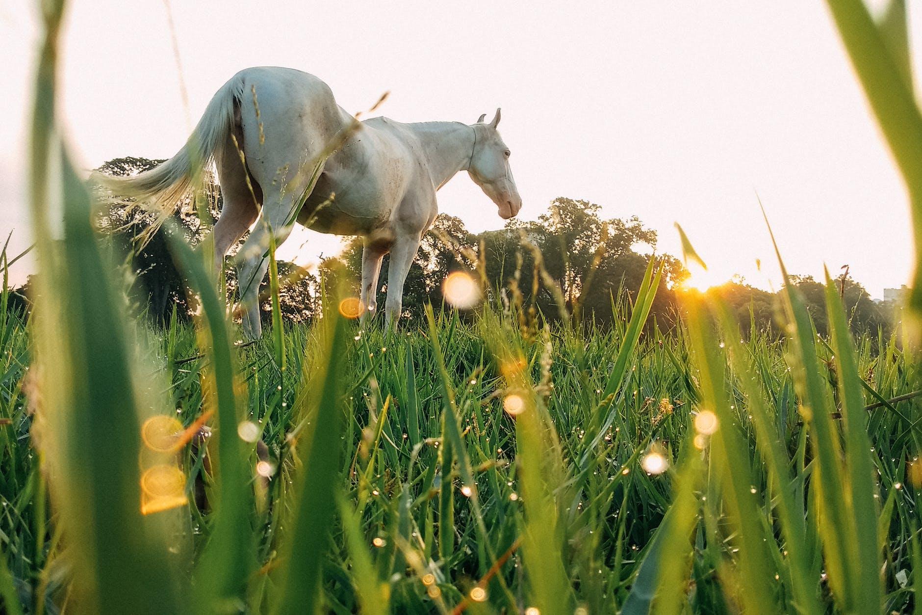 The forgotten risks of summer grazing