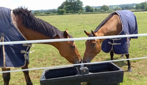 owners group horses wouldubewell and paris dixie on their holidays