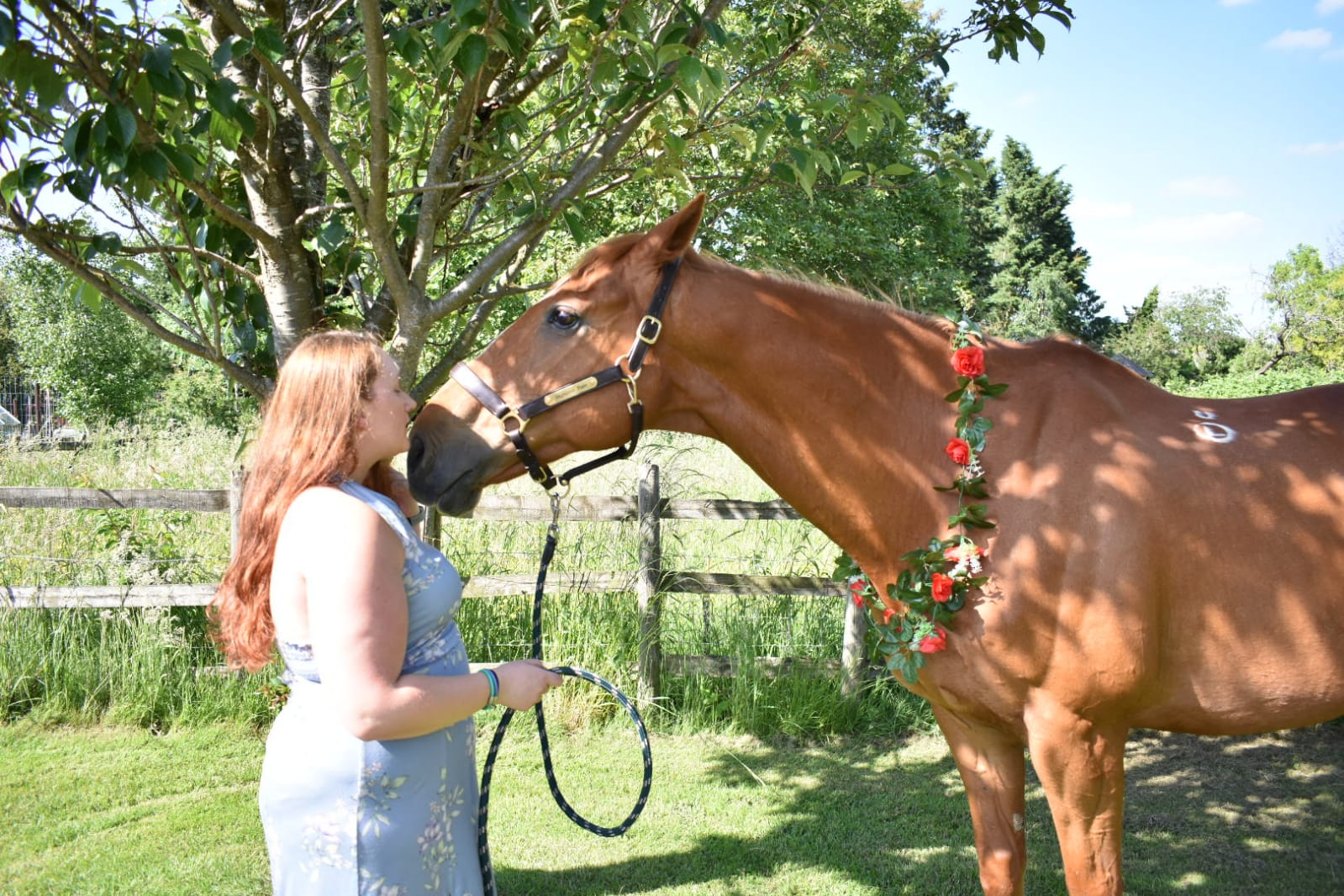 5 things horse owners won't admit about horses