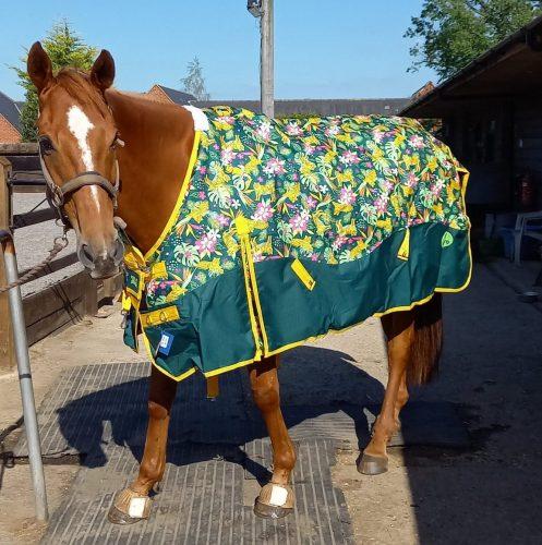 ponyo tiger tiger patterned horse rugs