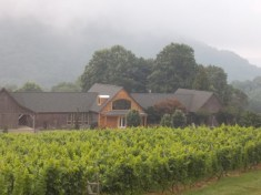 Linden winery with vines.