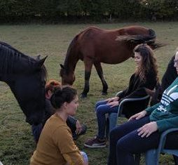 Soigner son cheval avec respect
