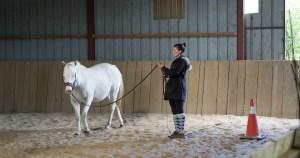 Travailler à pied pour mieux progresser à cheval