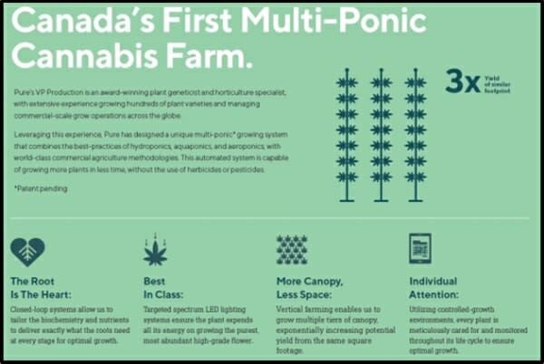 Pure Global Cannabis Purev Grows Up At Triple Speed Equityru