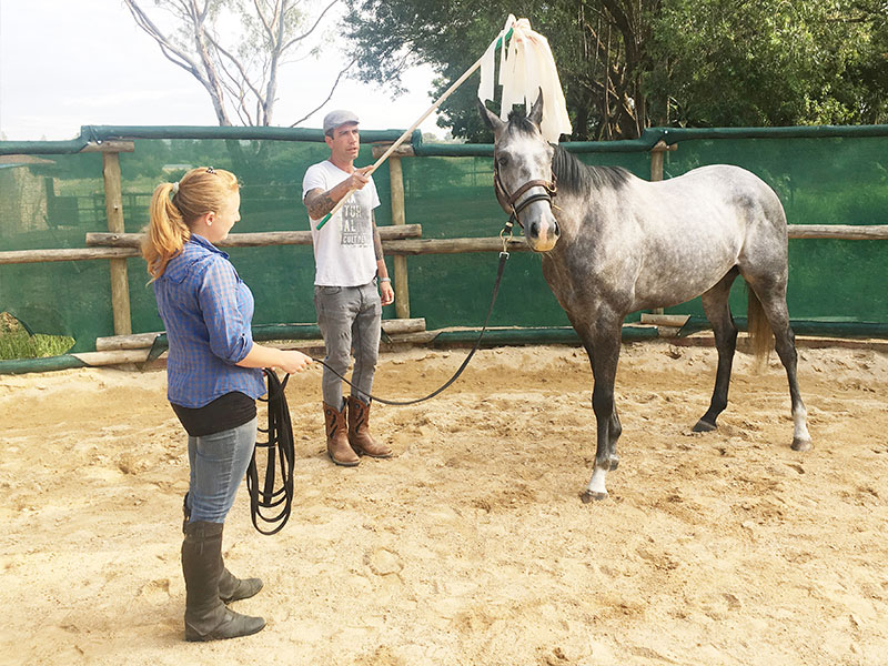 Monty Roberts Certified Instructor Simon d'Unienville desensitizing spooky horse to plastic