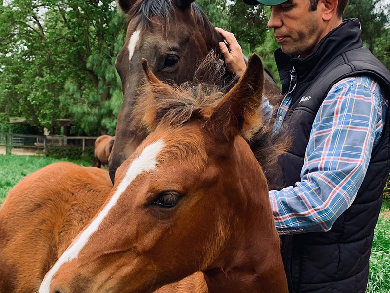 Monty Roberts Instructor Simon d'Unienville working with foals at Flag Is Up Farms