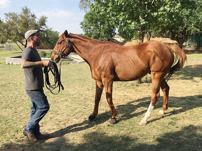 Equiville Horsemanship - horsemanship clinics - ground manners clinic