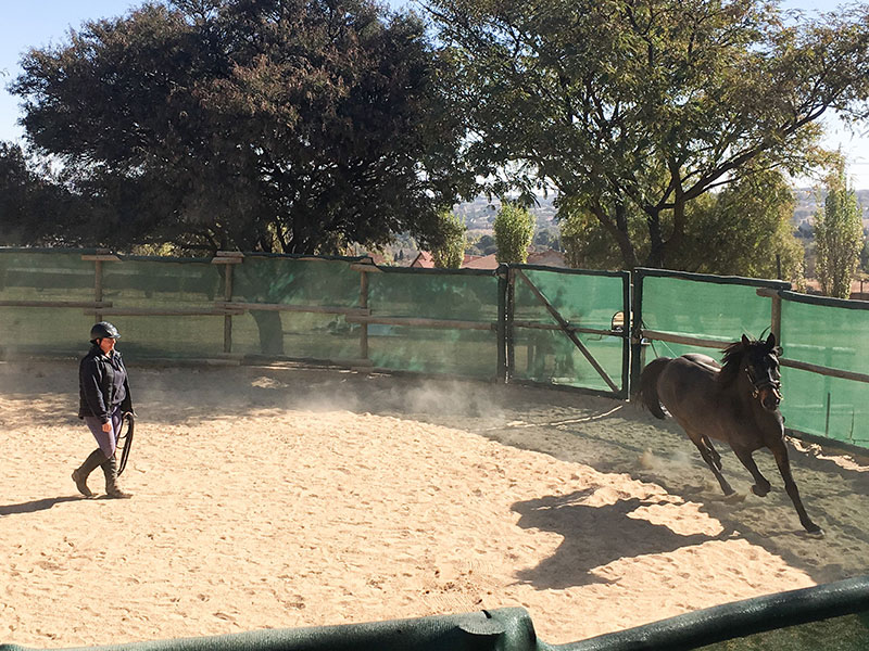 Join-Up with a horse - Monty Roberts Introductory Course