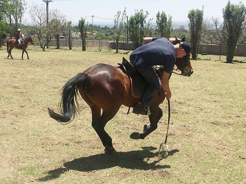 Polocrosse horse training - Equiville Horsemanship