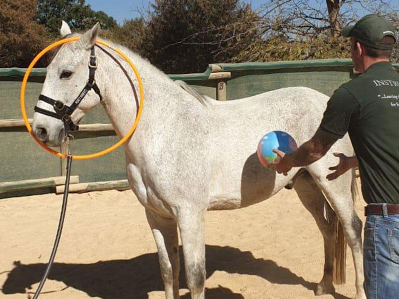 Equiville Horsemanship - horsemanship clinics - ground manners clinic - desensitizing spooky horse